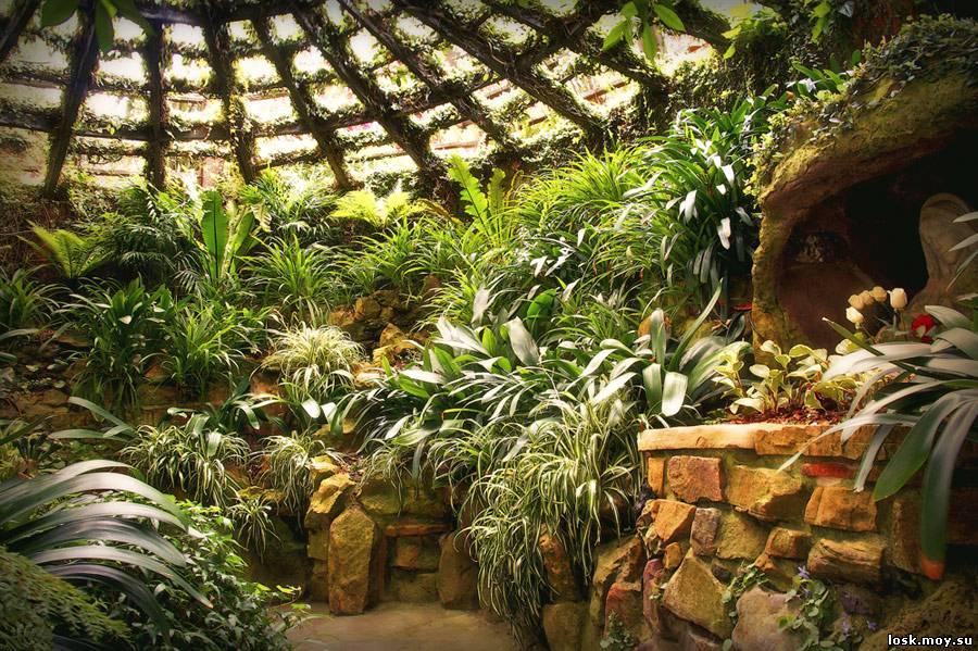 Зимний сад в своем доме своими руками фото фото 435